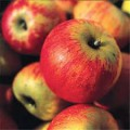 Pomme Reine des Reinettes BIO et DEMETER (Biodynamie)