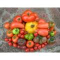Tomate variétés anciennes